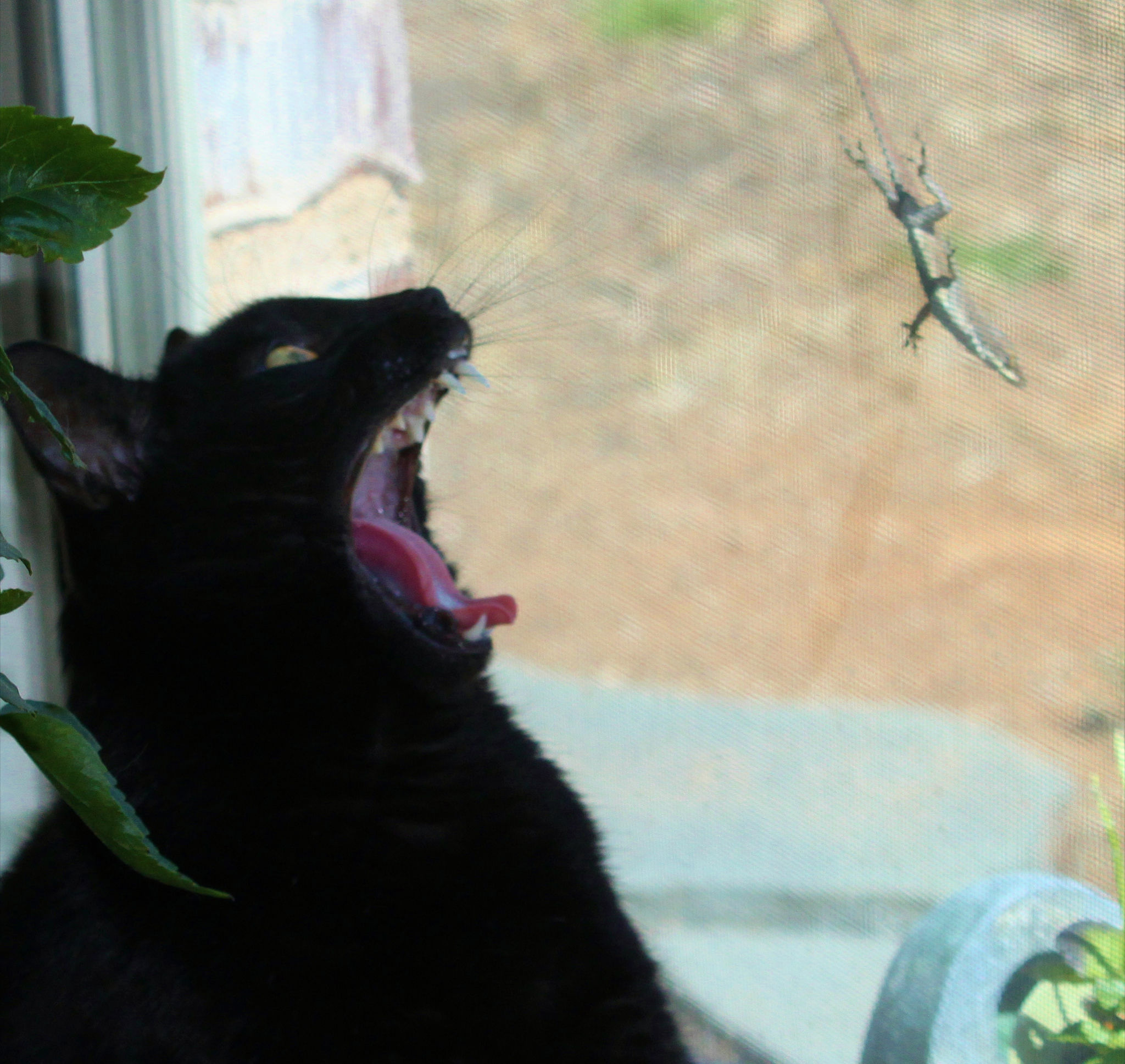 Cat looking at Lizard